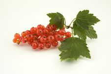 Free Red Currant Royalty Free Stock Image - 23414576