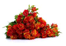 Free Bunch Of Red Roses Stock Photography - 23415472