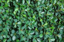 Free Green Plant  Wall Stock Image - 23417201