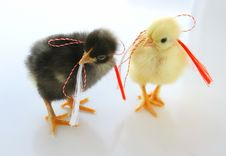 Free Two Little Chickens For Spring Holidays Royalty Free Stock Image - 23417356