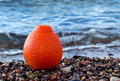 Free Orange On The Marine Beach Royalty Free Stock Image - 23425556
