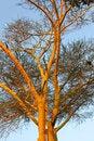 Free African Fauna Stock Image - 23425971