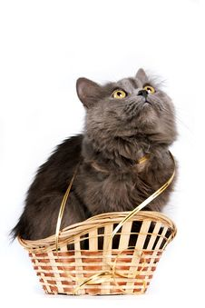 Free Gray Cat In A Basket Royalty Free Stock Photos - 23432378