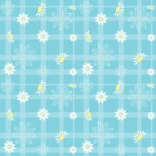 Free Daisy Background 2 Stock Photo - 23436730