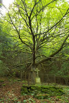 Calvary In The Deep Forest Stock Photos