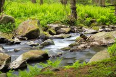 Free Small Wild River In Bohemian Forest Royalty Free Stock Images - 23439809