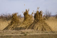 Free Reed Stack Royalty Free Stock Image - 23440746