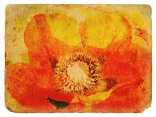 Free Red Poppy. Old Postcard Royalty Free Stock Photos - 23441028