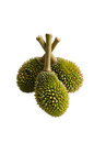 Free Baby Durian02 Royalty Free Stock Images - 23454239