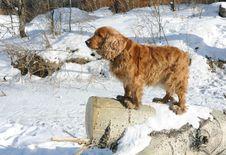 Free Dog On Log Royalty Free Stock Photo - 23451655