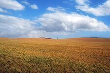 Free Wheat Field Royalty Free Stock Photos - 23451748