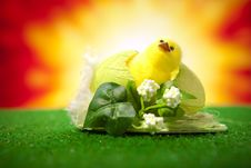 Free Happy Easter Chicken Stock Photos - 23455533