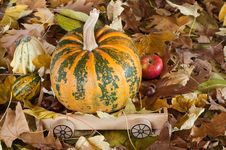 Free Autumn Stock Image - 23455551