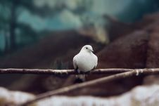 Free White Dove Like Symbol Of Peace Stock Photography - 23458392