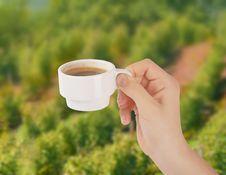 Free Coffee Stock Image - 23459321
