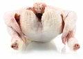 Free Raw Chicken Stock Photo - 23465520