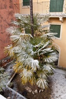 Free Snow On A Palmtree Royalty Free Stock Images - 23460699
