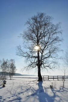 Free Winter Lanscape On Sunset Stock Image - 23461521