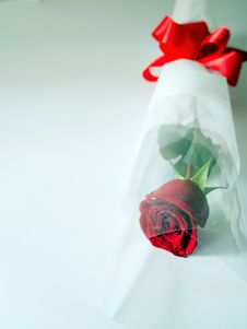 Free Red Rose Stock Images - 23465354