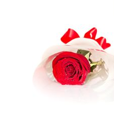 Free Red Rose Isolated On White Royalty Free Stock Photo - 23465355