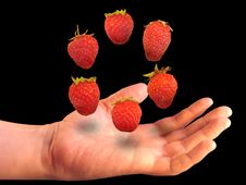 Free Six Berries Over A Palm Stock Photos - 23466573
