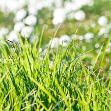 Free Fresh Green Grass Royalty Free Stock Photography - 23478907
