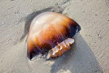 Free Mushroom Jellyfish Royalty Free Stock Photo - 23482705