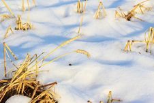 Free Winter And Grain Royalty Free Stock Photos - 23494688