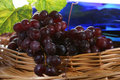 Free Grapes With Leaf And Wine Royalty Free Stock Photos - 2351008