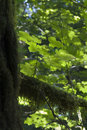 Free Young Plant On Old Tree Royalty Free Stock Photos - 2352448