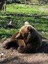 Free Tired Bear Stock Image - 2356681