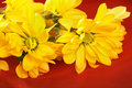 Free Yellow Daisy Stock Photography - 2359942