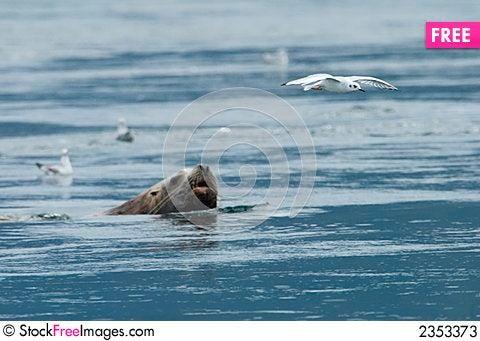Free Bird And Sealion Stock Photos - 2353373