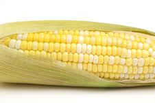 Free Ear Of Corn On White Upclose Royalty Free Stock Photo - 2350125