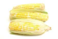 Free 3 Ears Of Corn Royalty Free Stock Photography - 2350137