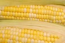 Corn On The Cob Background Stock Image