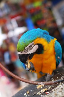 Free Parrot Stock Photo - 2350530