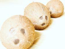 Free Three Sad Coconuts Stock Photo - 2350620