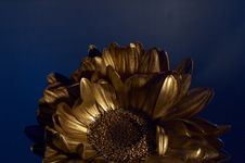 Free The Gold Flover Stock Photo - 2351160