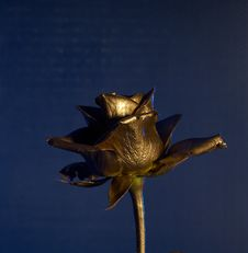 Free The Gold Flover Royalty Free Stock Images - 2351239