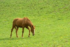 Free Brown Horse Stock Photography - 2351312