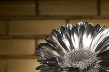 Free The Silver Flover Stock Photo - 2351470