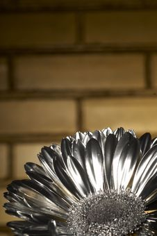 Free The Silver Flover Stock Photography - 2351482