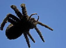 Free Black Spider Royalty Free Stock Photo - 2353835