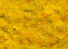 Free Yellow Spring Background Stock Images - 2356124