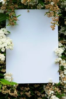 Free White Cardboard Stock Photography - 2356852