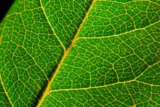 Free Close Up Of Green Leaf Royalty Free Stock Photography - 2357317