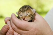 Baby Kitten With Eyes Closed Royalty Free Stock Images