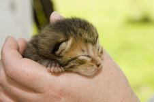 Baby Kitten With Eyes Closed Stock Photo
