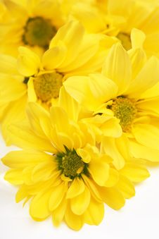 Free Yellow Daisy Royalty Free Stock Image - 2359906